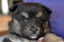 3rd October 2014 :: 4th October 2014_Girl(Pixie)1